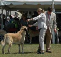 Anatolian Shepherd Puppies For Sale in Florida