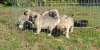puppies outside in small fence small.jpg
